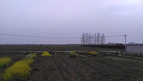 湖北省武汉市市辖区1000亩旱地出租
