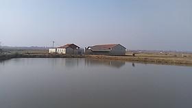 湖北省武汉市市辖区70亩综合养殖用地出租