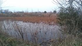湖北省武汉市市辖区30亩平畈水田出租