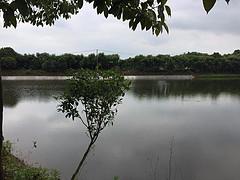 湖北省武汉市江夏区安山镇28亩综合养殖用地转包