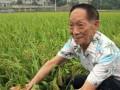 今天世界粮食日,这位87岁的老人又带来了好消息!