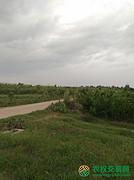 湖北省随州市随县唐镇转让150亩水果种植用地