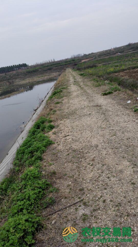 湖北省随州市随县草店镇出租200亩速生林
