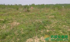 湖北省随州市随县唐镇转包40亩山区水田