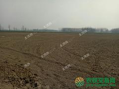 驻马店正阳县1000亩水浇地出租