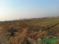 江苏省连云港市东海县转包130亩水浇地