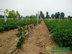 驻马店市遂平县转让40亩果园