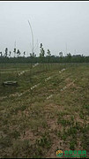 河南省开封市杞县转包150亩畜牧养殖用地