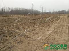 河南省开封市杞县转让73亩畜牧养殖用地