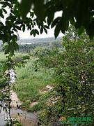 海南省省辖市县保亭黎族苗族自治县转让9亩果园