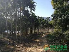 海南省省辖市县保亭黎族苗族自治县转让21亩果园