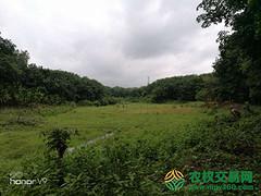 海南省出租40亩水浇地