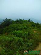 湖北省随州市随县草店镇转让300亩灌木林地