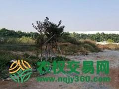 湖北省武汉市江夏区522亩工业用地招拍挂