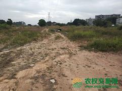 湖北省武汉市新洲区50亩旱地转让