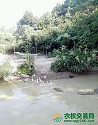 湖北省鄂州市粱子湖区117亩禽类养殖用地出租