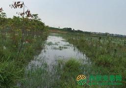 湖北省鄂州市粱子湖区2000亩坑塘出租