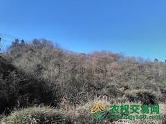 湖北省十堰市竹溪县16598亩有林地入股