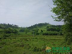 湖北省孝感市大悟县2000亩有林地出租