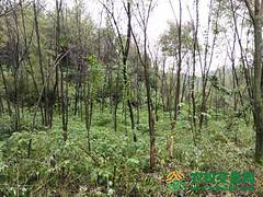 湖北省来凤县38453.4亩林地资源林权或股权转让