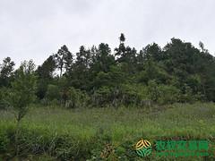 湖北省十堰市竹溪县30367.84亩有林地转让