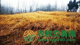 湖北省谷城县587.2亩天然无立木林地股权或林地经营权转让