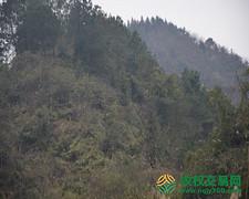 重庆市秀山县33640.6亩其他灌木林地股权或林地经营权转让
