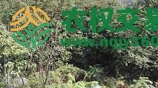 重庆市县酉阳兴隆镇41482.25亩灌木林地转让