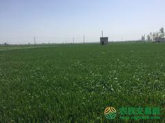 河南省南阳市邓州市400000亩水浇地出租