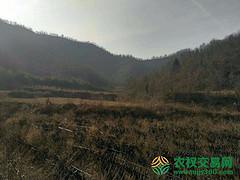 河南省南阳市内乡县1800亩灌木林地转让