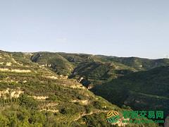 河南省三门峡市灵宝市1500亩灌木林地转让