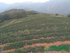 河南省三门峡市卢氏县120亩旱地转让