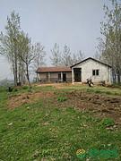 湖北省黄冈市团风县水库边400亩有林地转让