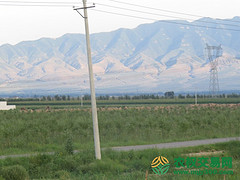 山西朔州市朔城区2000亩天然牧草地转让