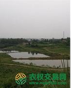 四川省成都市新津县170亩果园转让