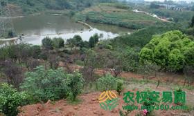 四川省成都市新津县88亩有林地出租