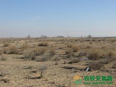 内蒙鄂尔多斯市鄂托克旗5200亩天然牧草地转让