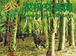 福建省漳州市漳浦县25亩其它林地出租