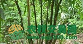 福建省漳州市漳浦县亩其它林地出租