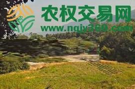 福建省漳州市芗城区50亩综合种植农场出租