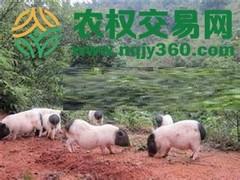 福建省漳州市长泰县亩禽类养殖用地转让