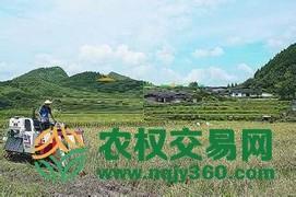 福建省漳州市龙海市43亩综合种植农场出租