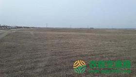 吉林省白城市通榆县苏公坨乡220000亩天然牧草地转包