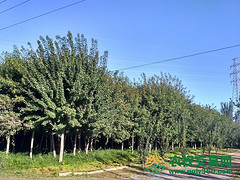 北京市市辖区顺义区牛栏山地区280亩综合种养农场转让
