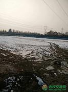 北京市顺义区40亩旱地转让