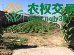 北京市市辖区顺义区8亩旱地出租