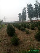 北京市顺义区56亩综合种植农场出租