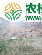 北京市市辖区顺义区500亩畜牧养殖用地转让