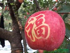 北京市昌平区崔村镇7亩果园转让