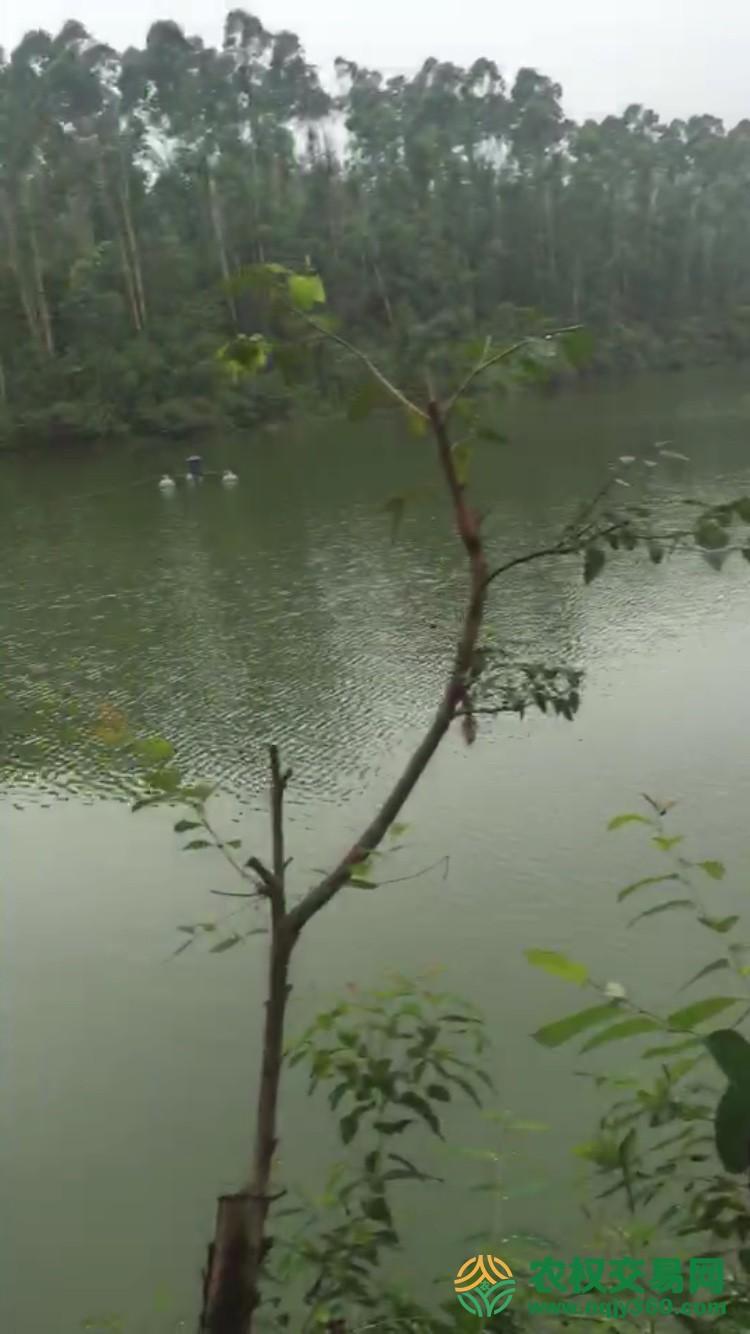 广东省江门市鹤山市共和镇53336平方米水产养殖用地转让